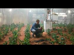 ಮಂಗಳ ಗ್ರಹದಲ್ಲಿ 10 ವಿಧದ ತರಕಾರಿ ಬೆಳೆದ ವಿಜ್ಞಾನಿಗಳು