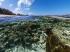 ಫೋನ್ ಡಿಸ್ಪ್ಲೇ ಲುಕ್ ಬದಲಾಯಿಸುವ ಮಾರ್ಷ್ ಮಲ್ಲೊ ವಾಲ್ಪೇಪರ್ಗಳು